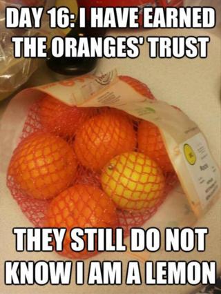 Funny-pictures-oranges